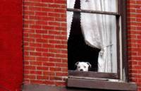 Smith Street March 2009 Watch Dog In Window