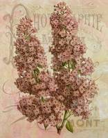 French Lilac Vintage Inspired Collage - Lilacs and