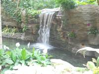Gaylord Palms Waterfall