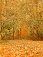 Art Of Autumn