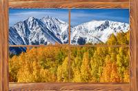 Autumn Aspen Tree Forest Barn Wood Picture Window
