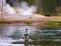 Fly Fishing, Yellowstone National Park 3
