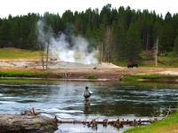 Fly Fishing in Yellowstone