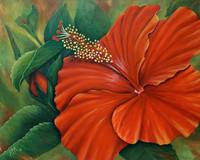 Orange Red Hibiscus