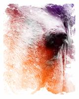 horse abstract vibrant 20x16