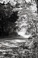 Michigan Fall Backroad BW