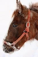 Winter Horse by David Kocherhans