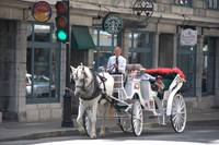 Tourist Horse and Buggy DSC_0003