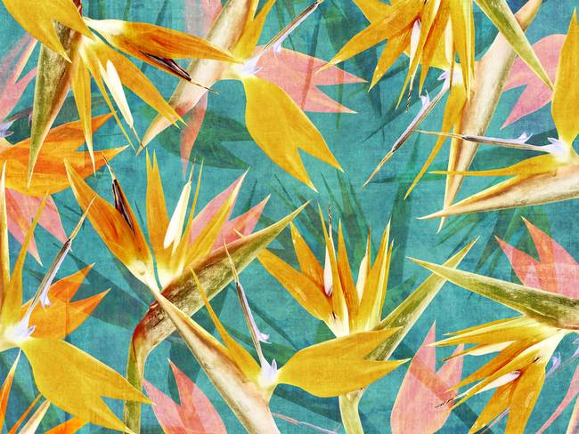 stunning abstract bird of paradise artwork for sale on fine art prints