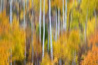 Surreal Aspen Tree Magic Abstract Art