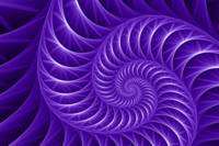 Fractal Purple Flower Spiral