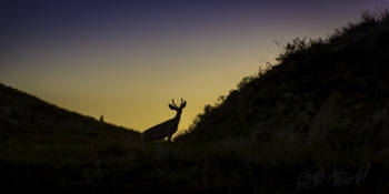 Deer Sihlouette and Sunset