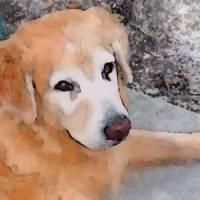 Dog by Barbara Wilford Gentry