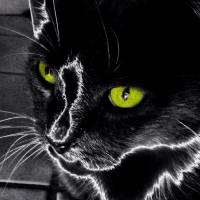 Neon Cat by Barbara Wilford Gentry