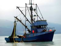 A Purse Seiners Catch