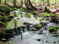 Mossy stream in the woods