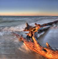 Driftwood in Lake Superior