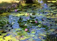 Southern Lily Pond by Carol Groenen