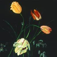 Birthday Tulips