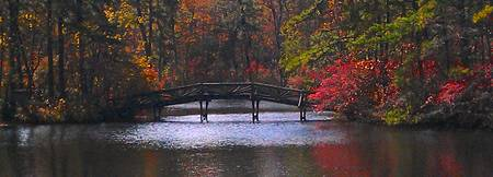 Fall Pinelands Foot Bridge