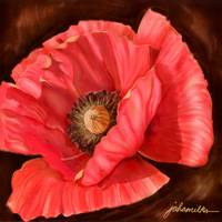 Red Poppy Two