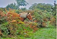 Palomino Exiting Bracken HDR Photo