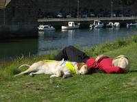Guide Dog Relaxing With Owner