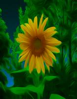 Twilight Sunflower