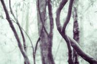 Woodland Photographic Artwork