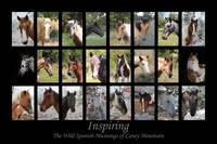 Inspiring - The Wild Spanish Mustangs series