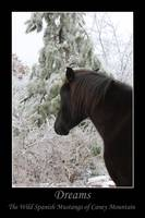 Dreams - The Wild Horses of Caney Mountain series