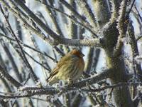 Little Bird On A Frosty Winter Morning