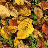 Winter Leaves by Donnie Shackleford