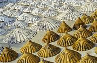 Yellow and White Saa-Paper Umbrellas (Thailand)