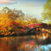 Gapstow Bridge in Autumn Art Prints & Posters by Jessica Jenney