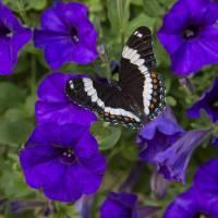Butterfly Garden by Roger Dullinger