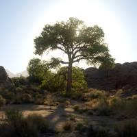 Tree of Light Art Prints & Posters by Jason Leffler