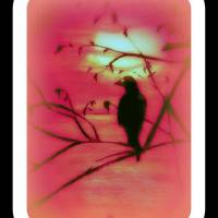 1975979521126646555513695642253295n Art Prints & Posters by rebecca cate