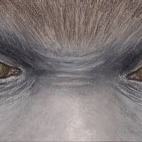 SASQUATCH EYES (BIGFOOT) Art Prints & Posters by Rebekah Sisk