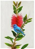 red flower indigo bunting