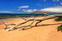 A Branch On Keawakapu Beach