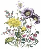 Mixed Flowers by Jane Webb Loudon
