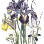 FlowerGarden gallery