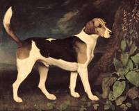Ringwood, a Brocklesby Foxhound, 1792