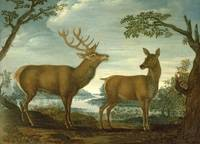 Stag and hind in a wooded landscape