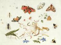 Study of Insects and Flowers