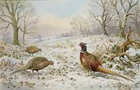 Pheasant and Partridges in a Snowy Landscape