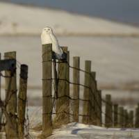 Snowy Light Post by Thirteenth Avenue Photography