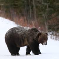 Bear 122 by Thirteenth Avenue Photography