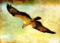 Ancient Hunter by Carol Groenen